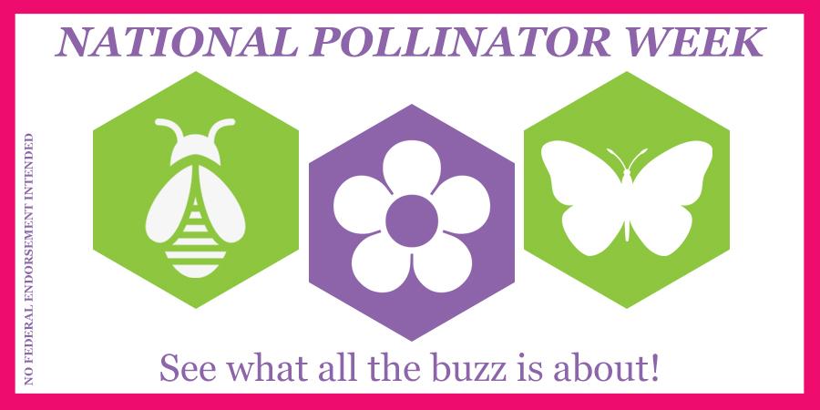 Pollinator Week Blog Banner
